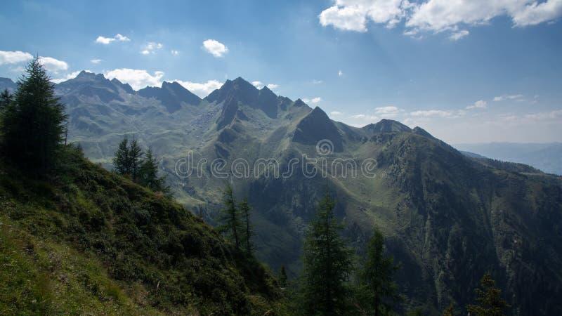 Naaldbomen die op berg groeien stock fotografie