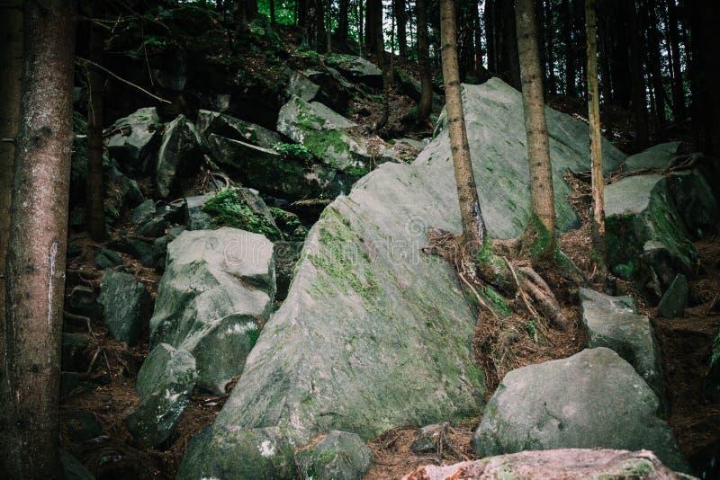 Naaldbomen die van keien in de bergen groeien stock foto's
