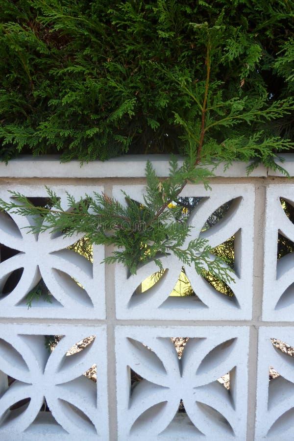 Naaldboom het plakken door een omheining royalty-vrije stock foto's