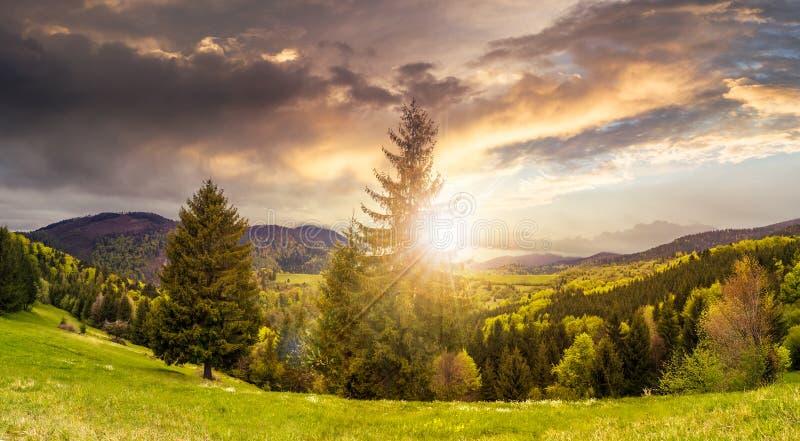 Download Naaldbos In Berg Bij Zonsondergang Stock Afbeelding - Afbeelding bestaande uit scène, blauw: 54082553