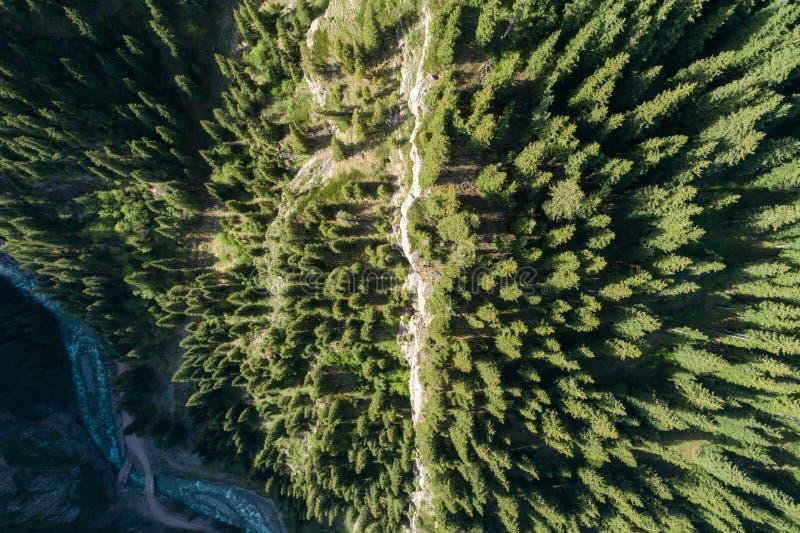 Naaldbos op Berghelling Lucht Mening stock afbeeldingen