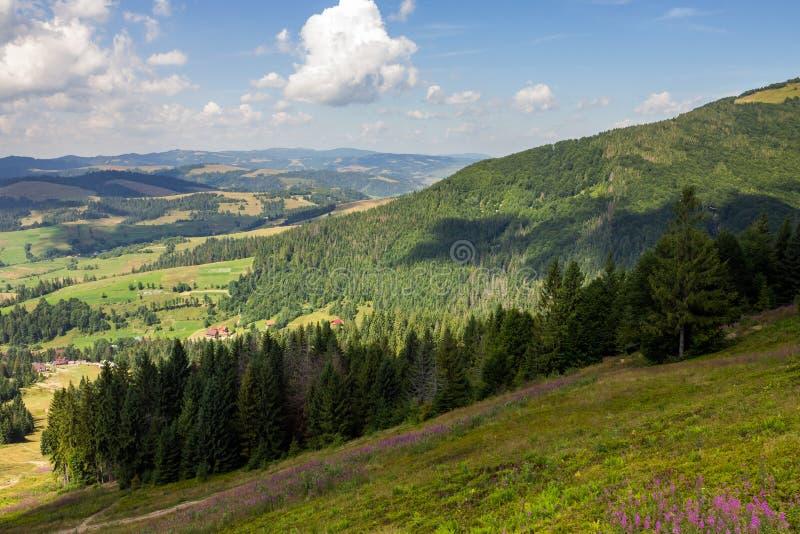Naaldbos op een berghelling stock foto
