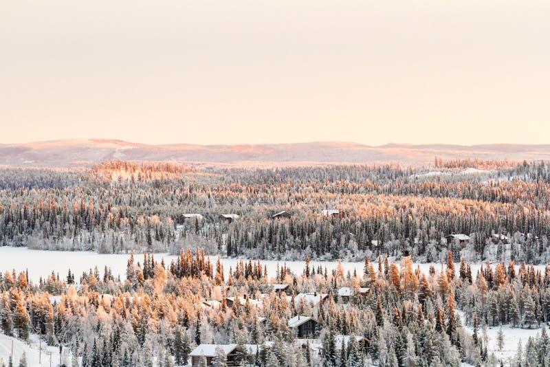 Naalddiebos met sneeuw wordt behandeld Mooie de wintermening in Finland, Ruka stock foto's
