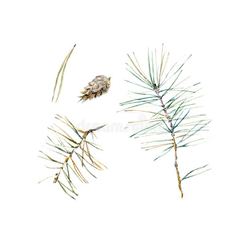 Naaldtakje en pinecone op een witte achtergrond vector illustratie