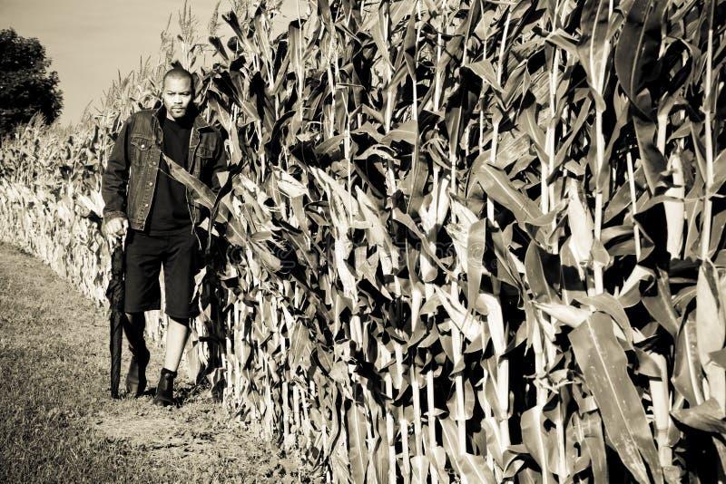 Naast cornfield stock fotografie