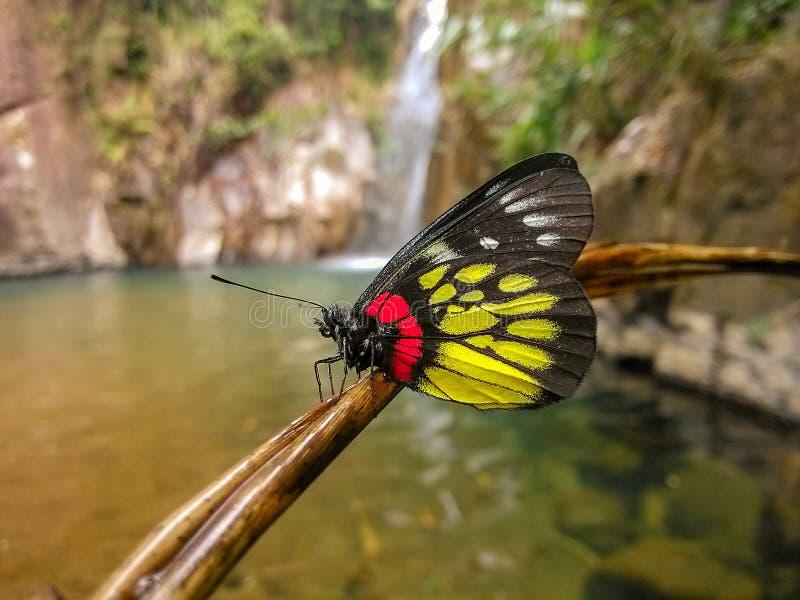 Naast de waterval, een mooie vlinder royalty-vrije stock afbeeldingen