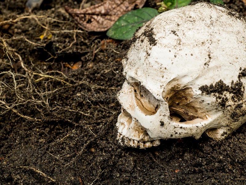 Naast van menselijke die schedel in de grond wordt begraven De schedel heeft vuil in bijlage aan de schedel concept dood en Hallo stock afbeelding