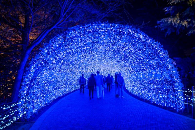 Nabana żadny Sato zimy iluminacja zdjęcie stock