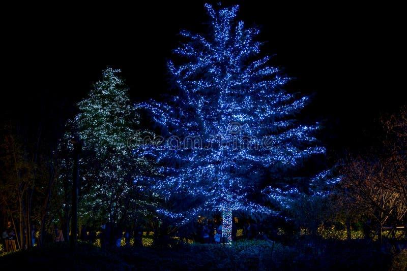 Nabana inte Sato, ljus festival p? Nagashima, Mie Prefecture japan royaltyfria foton