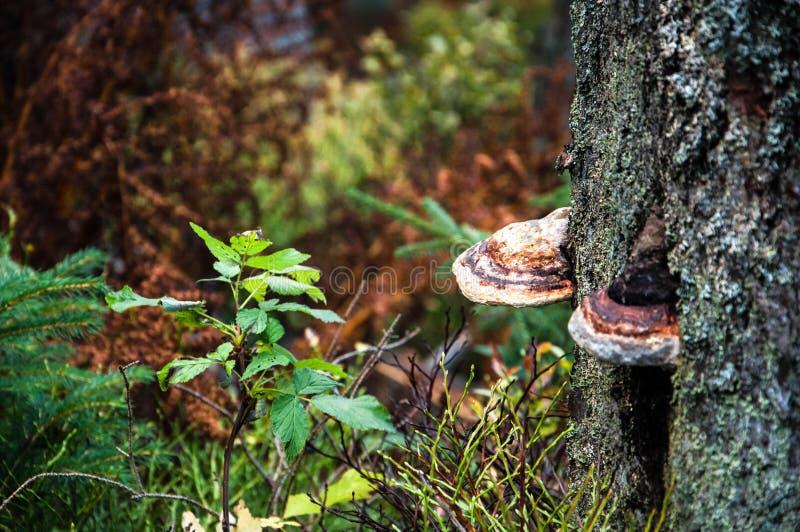 Naben, die auf einem Baum wachsen stockfotos