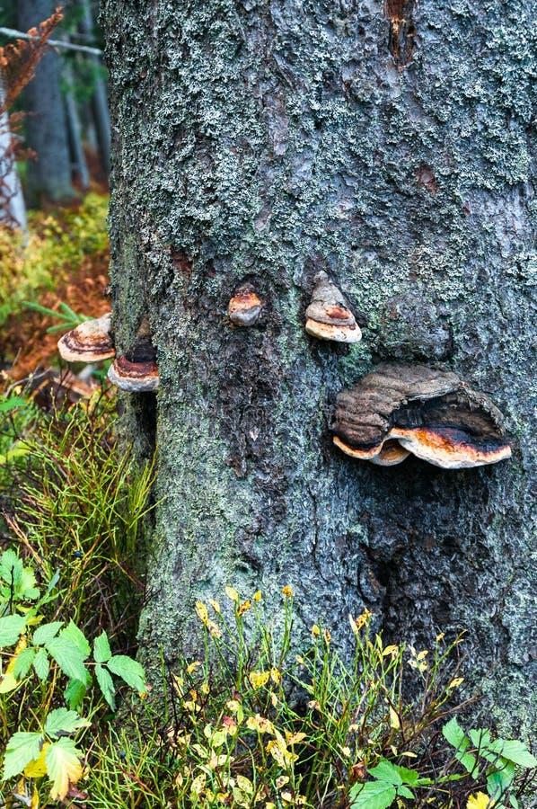 Naben, die auf einem Baum wachsen lizenzfreie stockfotos