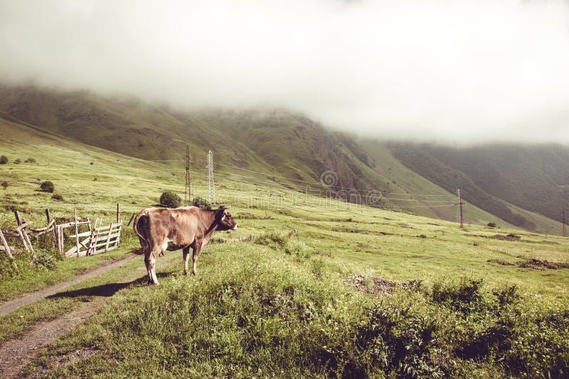 Nabiał krowa patrzeje na zieleni polu 7 zwierzęcia kreskówki gospodarstwa rolnego ilustraci serii krajobrazu wiejskiego Uprawiać  zdjęcia royalty free