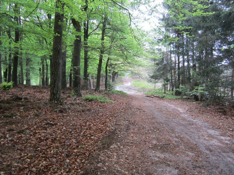 Nabij De Zwitserse Hut Free Public Domain Cc0 Image