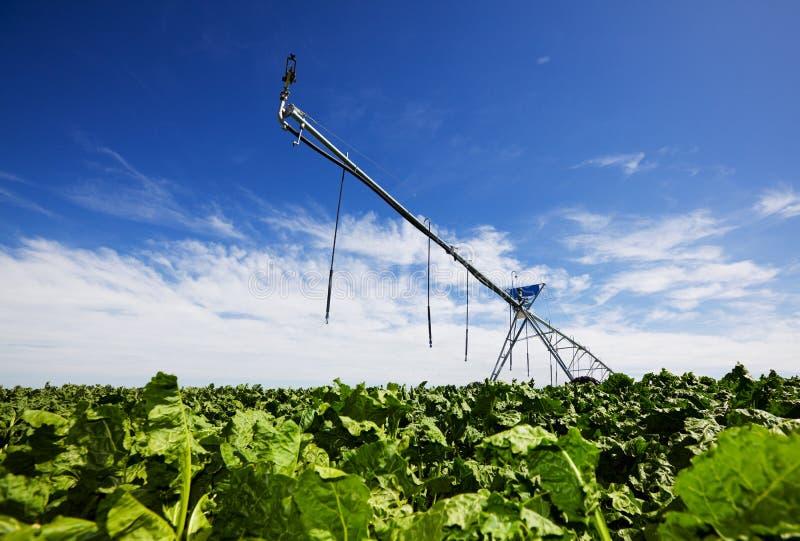 Nabos de irrigação imagens de stock royalty free