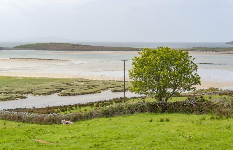 Nabrzeżna sceneria w Connemara obrazy royalty free