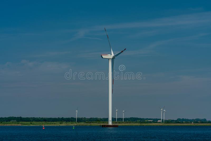 Nabrzeżna siła wiatru roślina przy morzem bałtyckim obraz stock