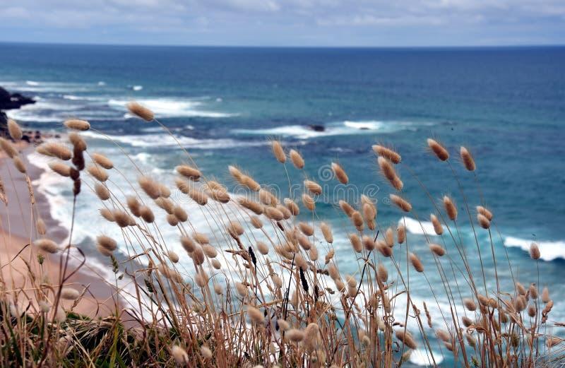 Nabrzeżne trawy na wybrzeżu zdjęcie stock