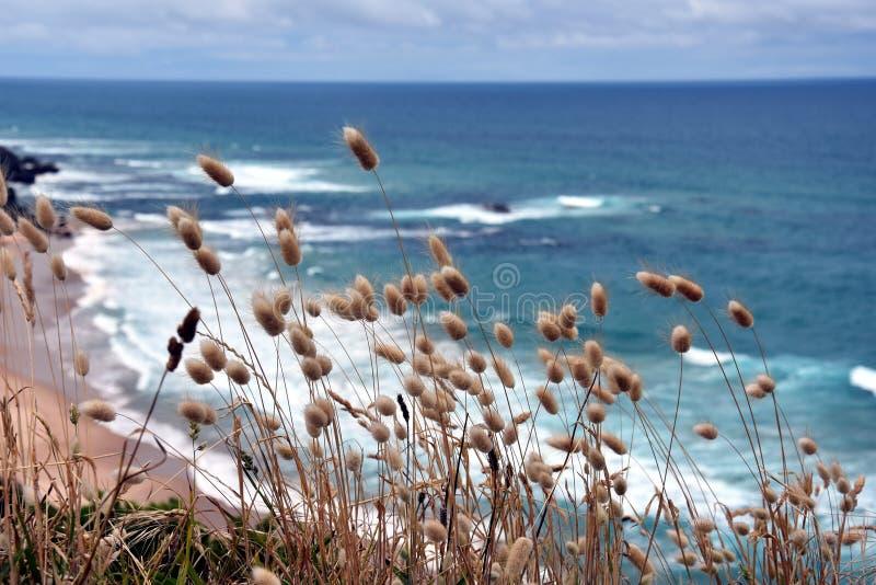 Nabrzeżne trawy na wybrzeżu obraz royalty free