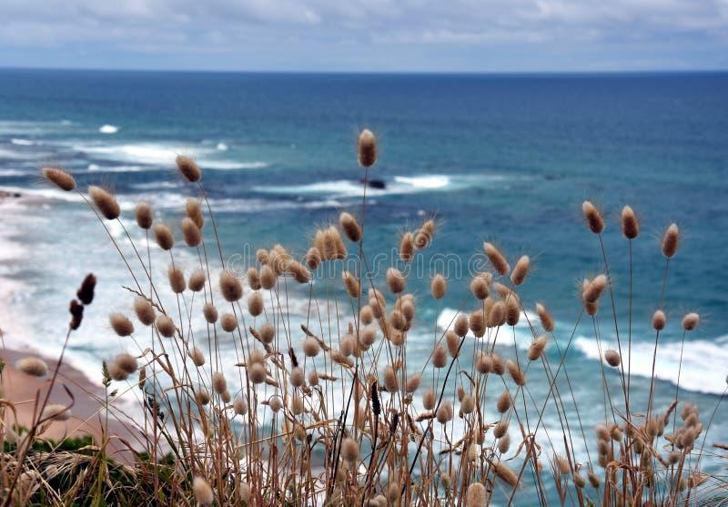 Nabrzeżne trawy na wybrzeżu obrazy royalty free