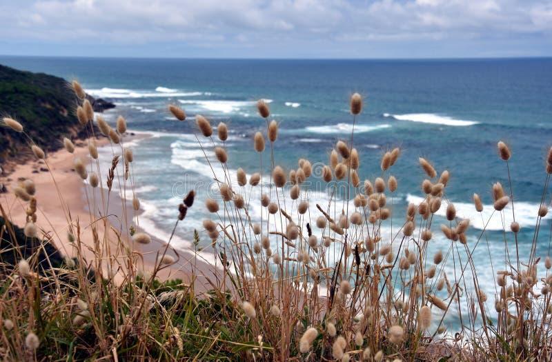 Nabrzeżne trawy na wybrzeżu obrazy stock