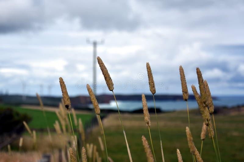 Nabrzeżne trawy na wybrzeżu fotografia royalty free