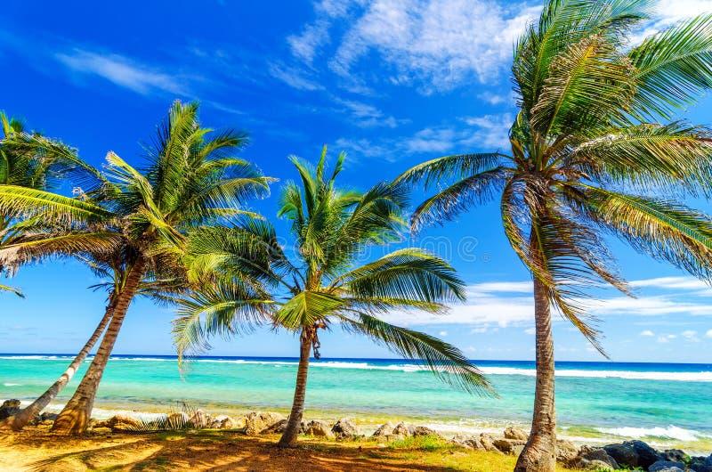 Nabrzeżni drzewka palmowe obrazy stock