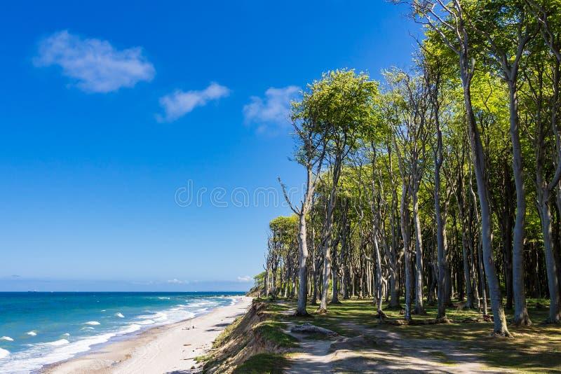 Nabrzeżny las na morza bałtyckiego wybrzeżu zdjęcia stock