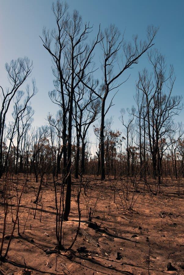 Nach dem Bushfire stockfotografie