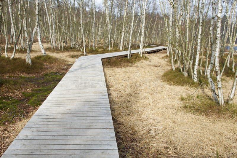 Nach dem rechten Weg durch die Bäume stockbilder