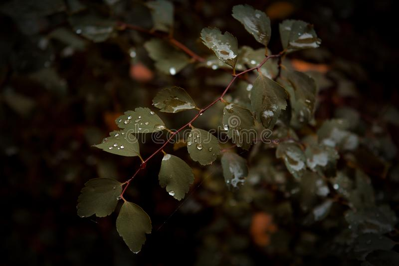 Nach dem Regen stockfotografie