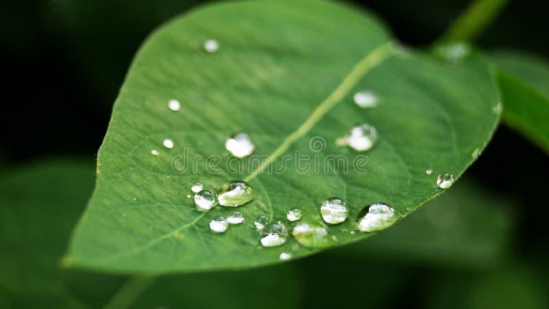 Nach dem Regen lizenzfreie stockfotografie