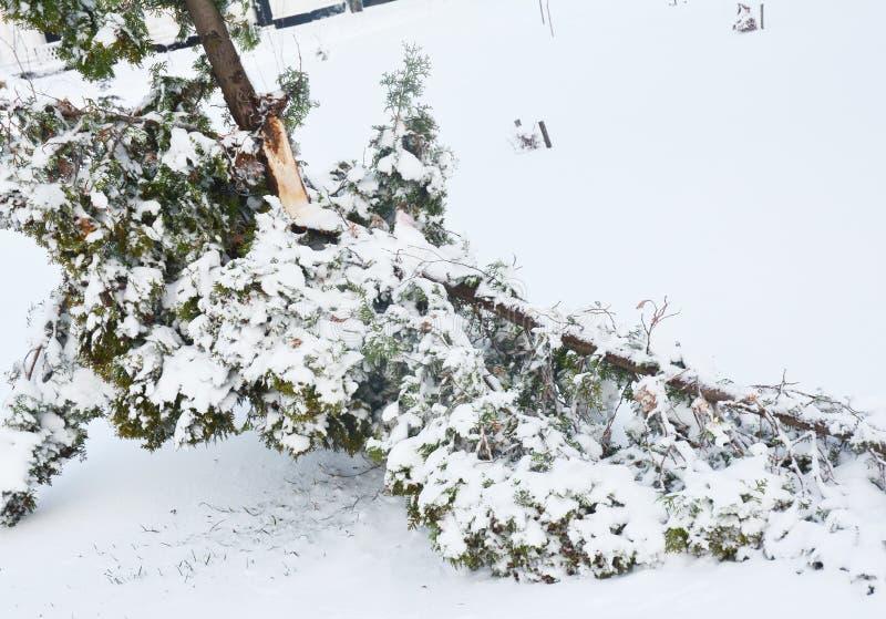 Nach dem Schnee-Sturm: Fertig werden mit den Schnee-und Eis-schädigendembäumen stockbild