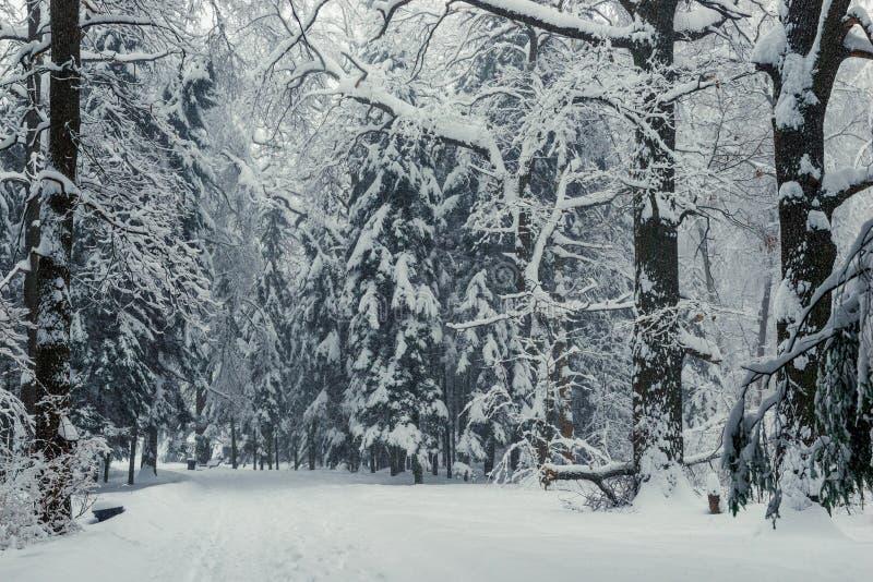 nach einem Schneesturm im Winterwald viel stockfotos