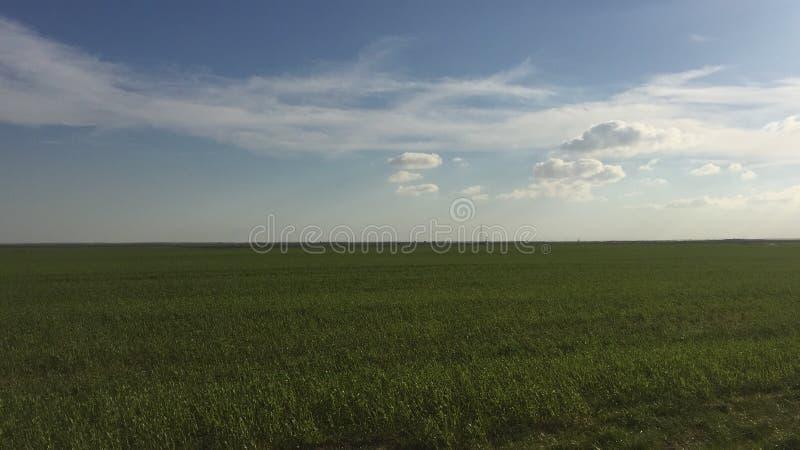Nach Mittag auf dem grünen Gebiet stockbild
