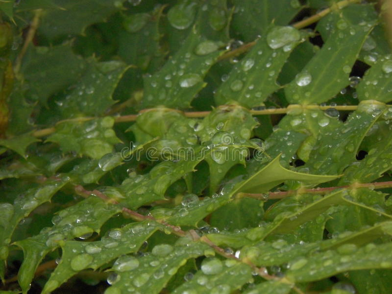 Nach Regen lizenzfreies stockfoto