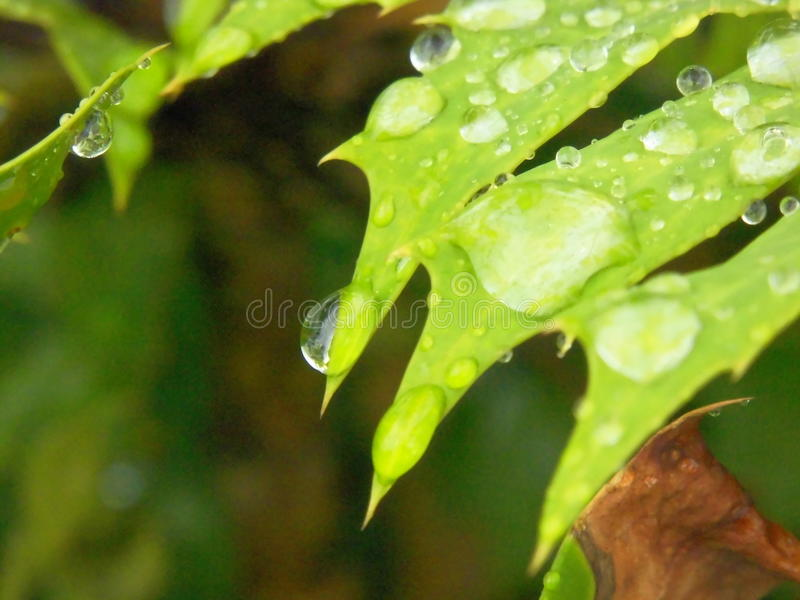 Nach Regen stockfotografie