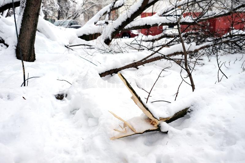 Nach Schneesturm stockbild