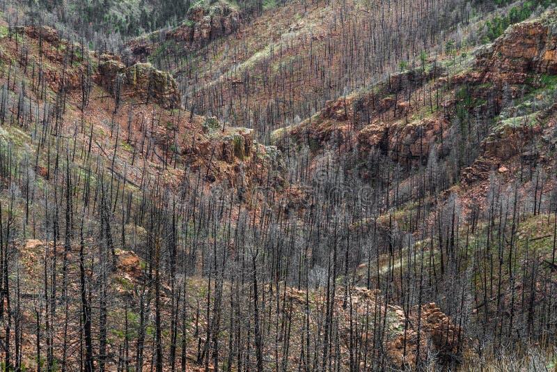 Nach Waldo Canyon Forest Fire in Colorado lizenzfreies stockbild