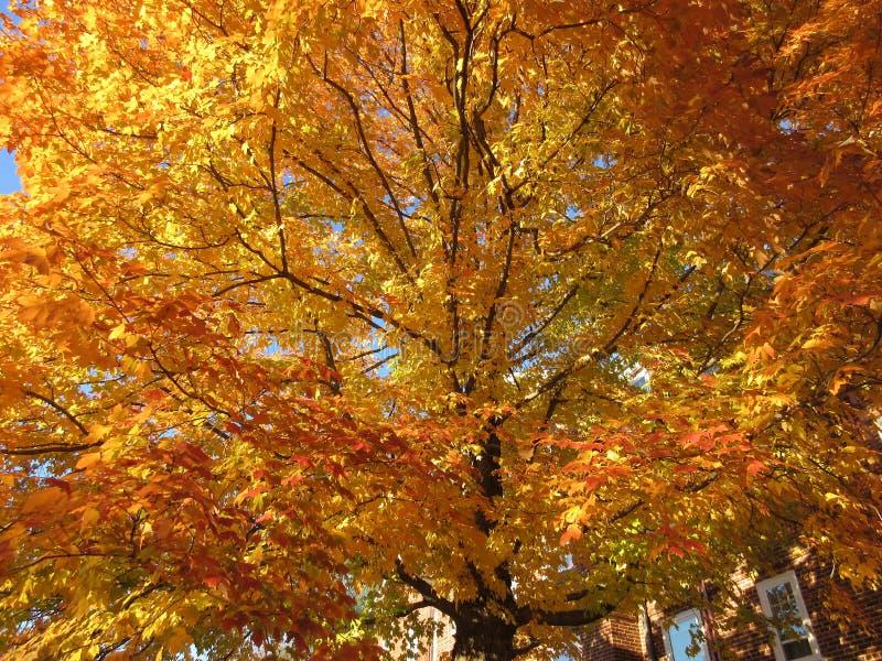 Nachbarschafts-Herbstlaub stockbild