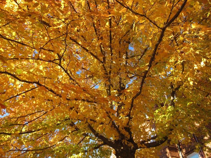 Nachbarschafts-Herbstlaub im November lizenzfreies stockfoto