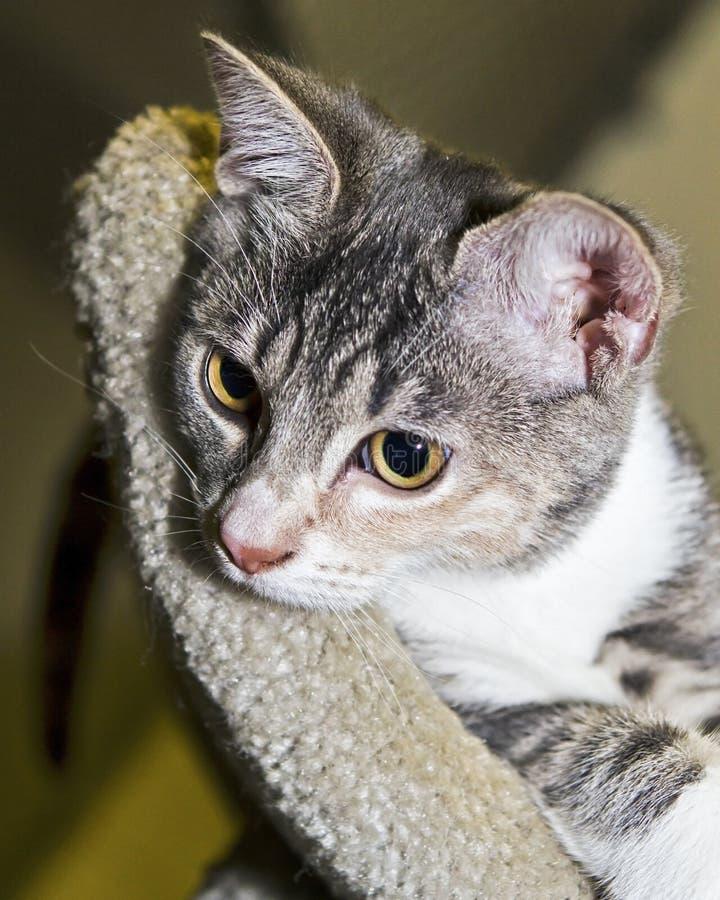 Nachdenkliches Kätzchen lizenzfreies stockfoto