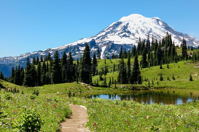 Naches Peak trail, flowering alpine meadows & Mount Rainier, WA. The Naches Peak Loop Trail in Washington State leads hikers through grassy alpine meadows royalty free stock images