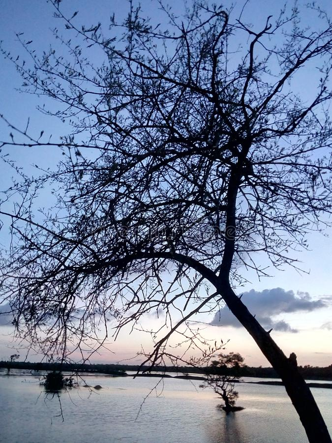 Nachmittagsschönheit eines Baums nahe einem See It& x27; s ehrfürchtig lizenzfreies stockbild