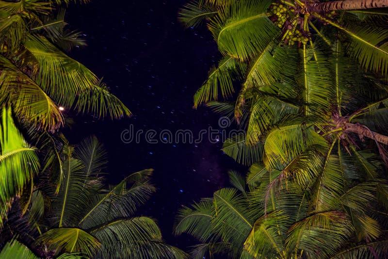 Nacht in de Maldiven met palmen royalty-vrije stock afbeelding