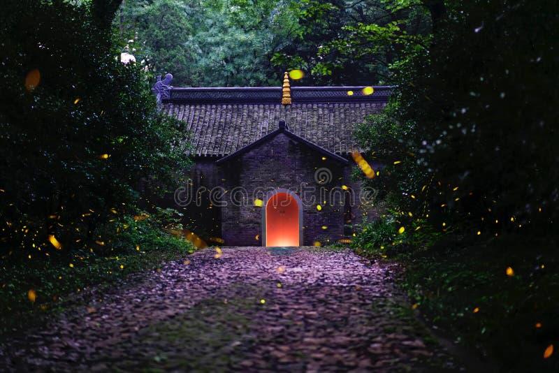 Nacht der Leuchtkäfer lizenzfreie stockbilder