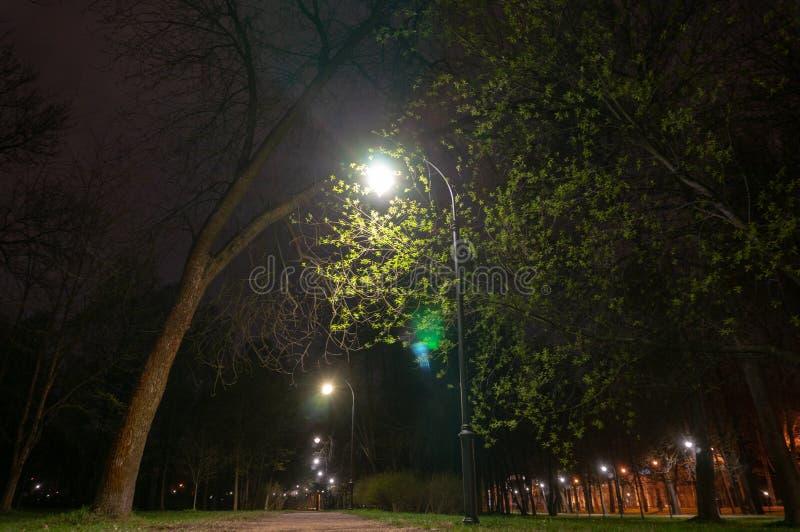 Nacht, die Weg f?r Wege in der Gasse angesichts der Laternen beleuchtet Dekoratives kleines Garten-Licht, Laternen im Blumenbeet  stockfoto