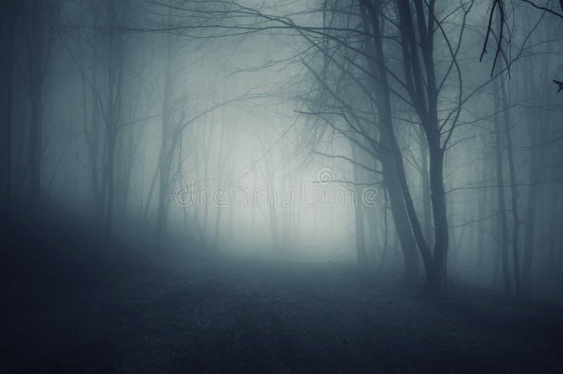 Nacht in een donker bos met blauwe mist in de herfst royalty-vrije stock foto