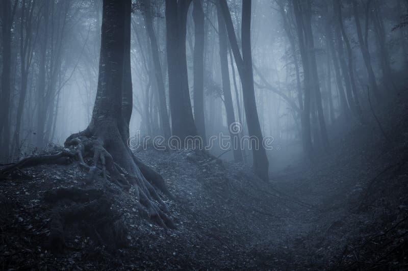 Nacht in een geheimzinnig bos stock foto
