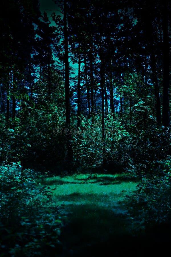Nacht in einem Wald stockbild