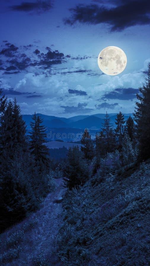 Nacht geht in Gebirgswald unter Mondlicht stockfoto
